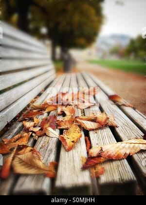 Autmn leaves on a park bench - Stock Photo