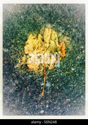 Dead and crushed leaf on pavement - Stock Photo