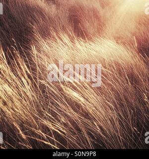 Sunshine on sand dunes - Stock Photo
