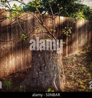 Hollow tree finds a way - Stock Photo