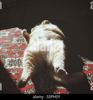 Lazy days - Stock Photo