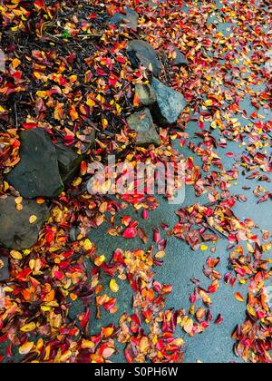 Fall leaves in a driveway - Stock Photo