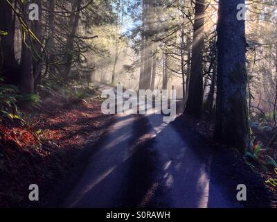 A person walking down a dirt road through the forest as sun rays shine through the fog - Stock Photo