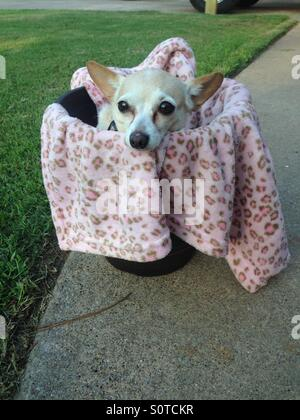 Comfy dog - Stock Photo