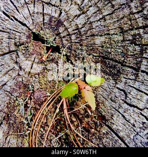 Still life on a tree stump - Stock Photo