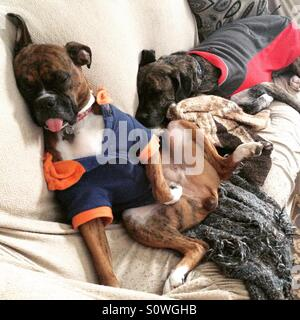 Funny dogs sleeping in jackets - Stock Photo