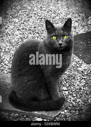 Beautiful gray cat with bright green eyes is sitting on an outdoor patio looking at the photographer. - Stock Photo