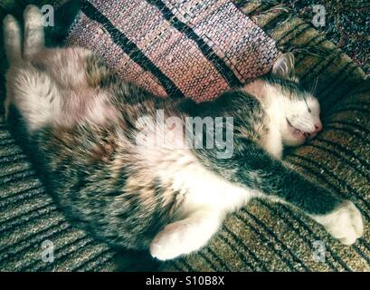 Cat sleeping in funny position with open mouth - Stock Photo