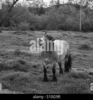 Kiss from a horse / Black and white / Horse with funny face - Stock Photo