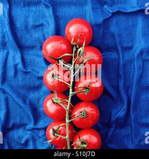 Beautiful cherry tomatoes on the branch on the vivid blue background