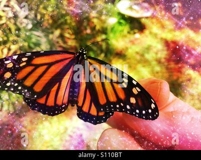 Newly emerged female monarch butterfly on a woman's hand, Ponte Vedra Beach, Florida, USA.