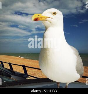 Seagull perched on top of a car - Stock Photo