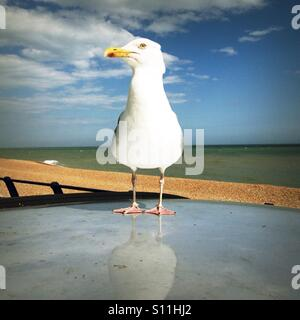 Seagull perching on top of a car parked by the beach - Stock Photo