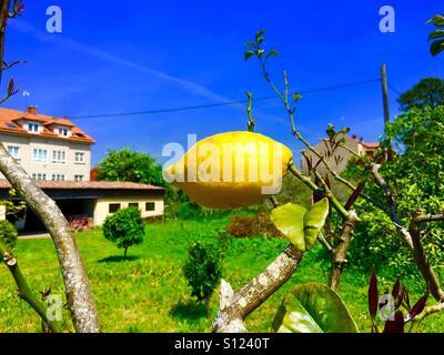 Horizontal lemon - Stock Photo