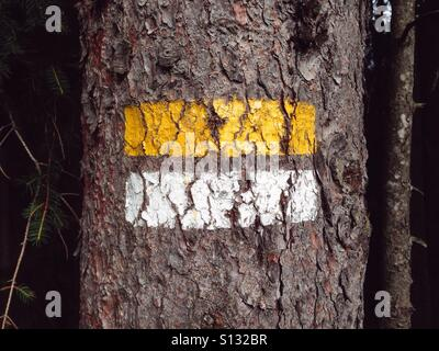 White and yellow stripes on a pine tree marking a hiking trail in the Austrian Alps, Kleinwalsertal, Austria - Stock Photo