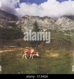 Cows on a meadow with mountains in the background (Pecol meadow, Julian Alps, Italy) - Stock Photo