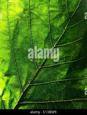 Close-up of a green leaf. - Stock Photo