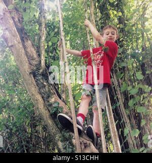 Seven year old boy climbing a tree. Hampshire, England, United Kingdom. - Stock Photo