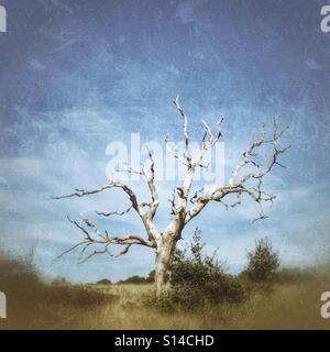 A dead tree on Hampstead Heath, London - Stock Photo