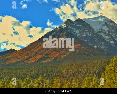 Larches in Autumn in Banff National Park - Stock Photo