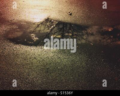 Tree branches reflected in a parking lot rain puddle with fallen leaves floating on top in the late afternoon. - Stock Photo
