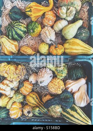 Pumpkins and squashes - Stock Photo