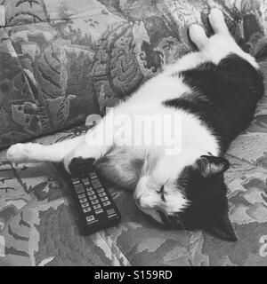 Cat sleeps on a coach - Stock Photo
