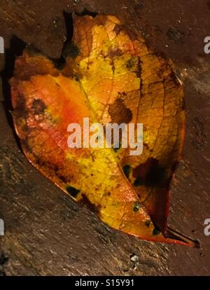 A Leaf's history - Stock Photo