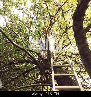 Seven year old boy climbing a apple tree - Stock Photo