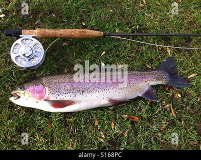 a fly rod, fly reel, trout fishing net, and box of artificial, Fly Fishing Bait