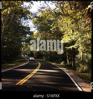 A drive through a wooded park. - Stock Photo