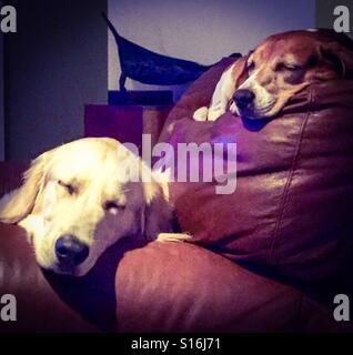 Lazy Sunday Morning - Stock Photo