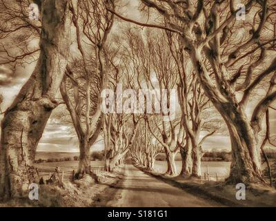 'THE DARK HEDGES' - An Avenue of 18th Century Beech Trees near Ballymoney in Co. Antrim, Northern Ireland. This - Stock Photo