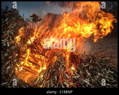 Burning olive branches during the seasonal pruning of olive trees, Catalonia, Spain. - Stock Photo