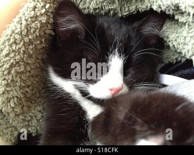 Sleeping black and white kitten - Stock Photo