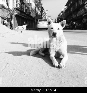 White dog in the street, Kathmandu - Stock Photo