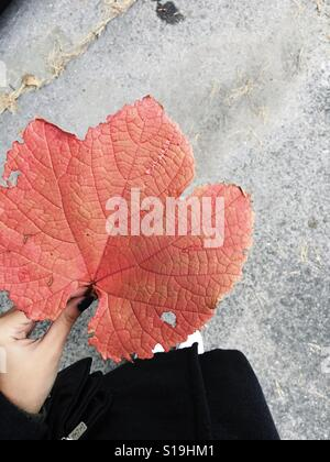 Woman's hand holding a maple leaf autumn - Stock Photo