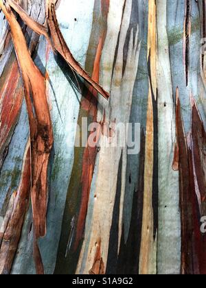 A close-up of the colorful bark of a eucalyptus tree. - Stock Photo