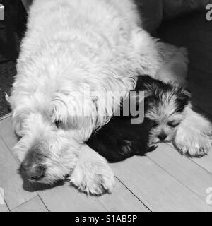 Let sleeping dogs lie. - Stock Photo