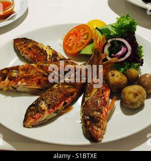 Fresh red snapper straight from the sea - Stock Photo