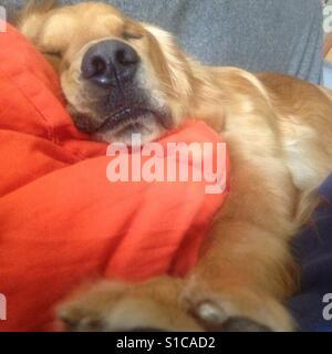 Lazy Sundays. What a ruff life!! - Stock Photo