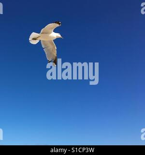 Seagull flying, bright blue sky in the background. Square crop. - Stock Photo