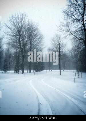 Snow flakes falling on a winter day with tire tracks leading away amongst bare trees. - Stock Photo