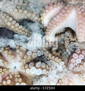 Octopuses in fish market - Stock Photo