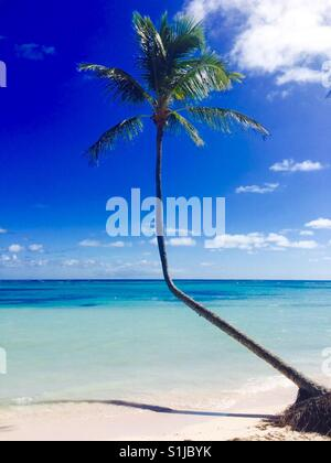 A palm tree against blue sky in a beach of Punta Cana, Dominican Republic. - Stock Photo