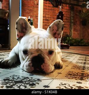 Bored dog - Stock Photo