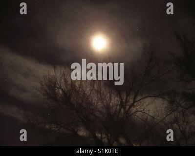 The moon & trees - Stock Photo