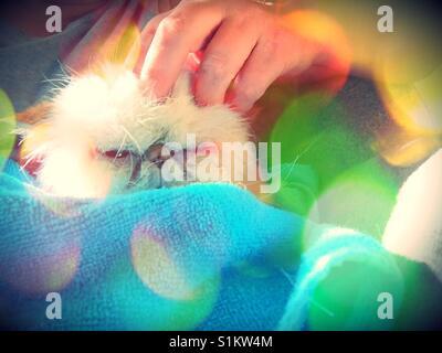 Happy Persian cat. - Stock Photo