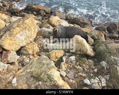 Seal on rocks - Stock Photo