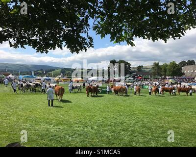 Royal Welsh Show, Builth Wells, Wales - August 2017: Judging of the cattle competition underway in the ring - Stock Photo